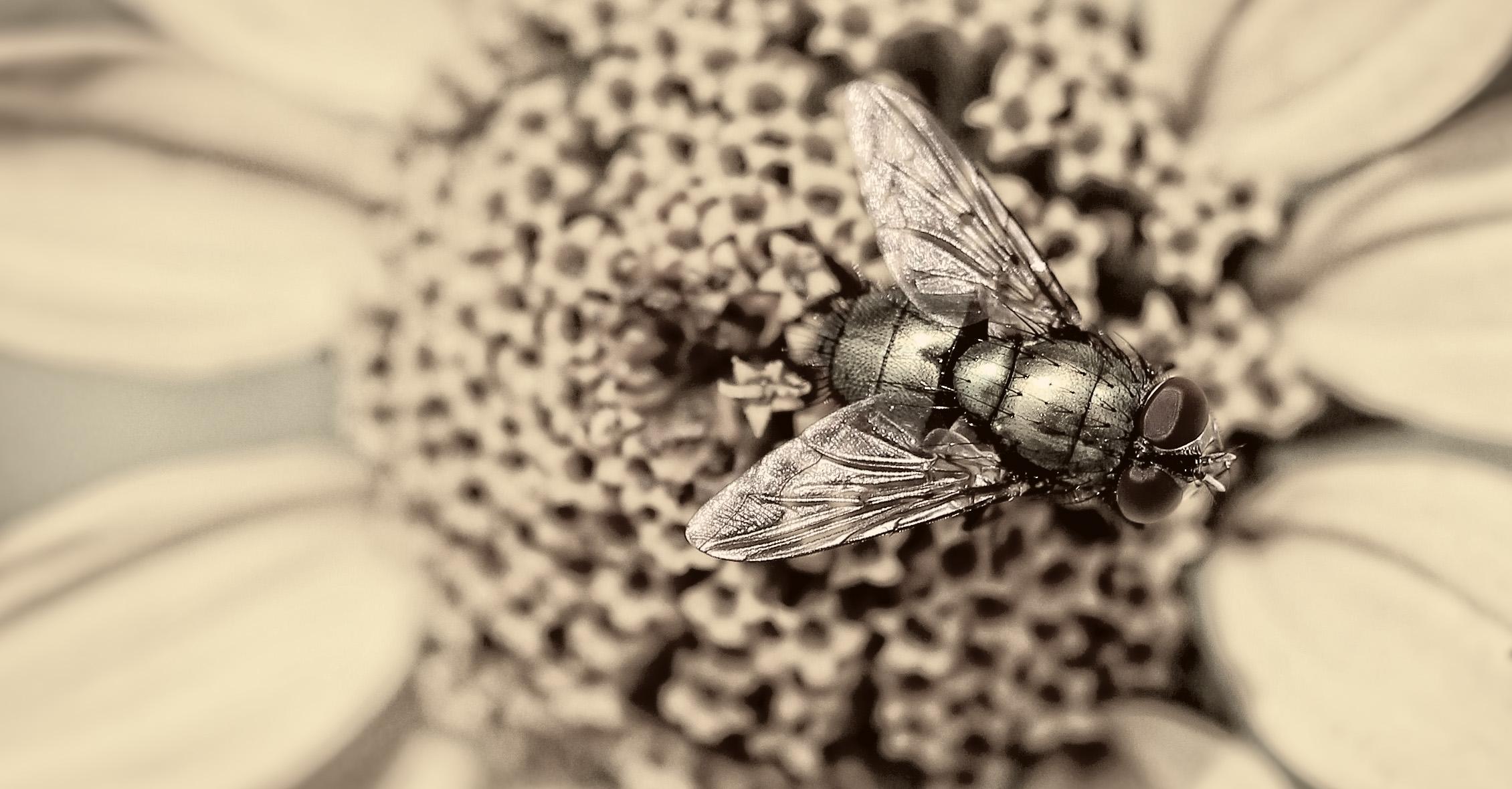 Die Fliege / the fly