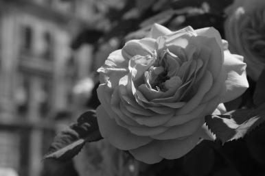 Schönheit1 3