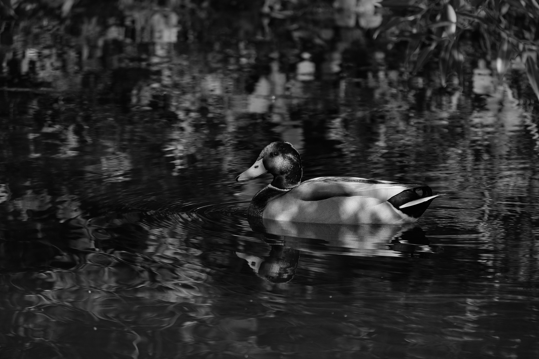Freischwimmer / afloat