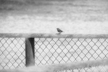 Einsamkeit1
