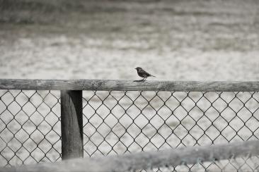 Einsamkeit2