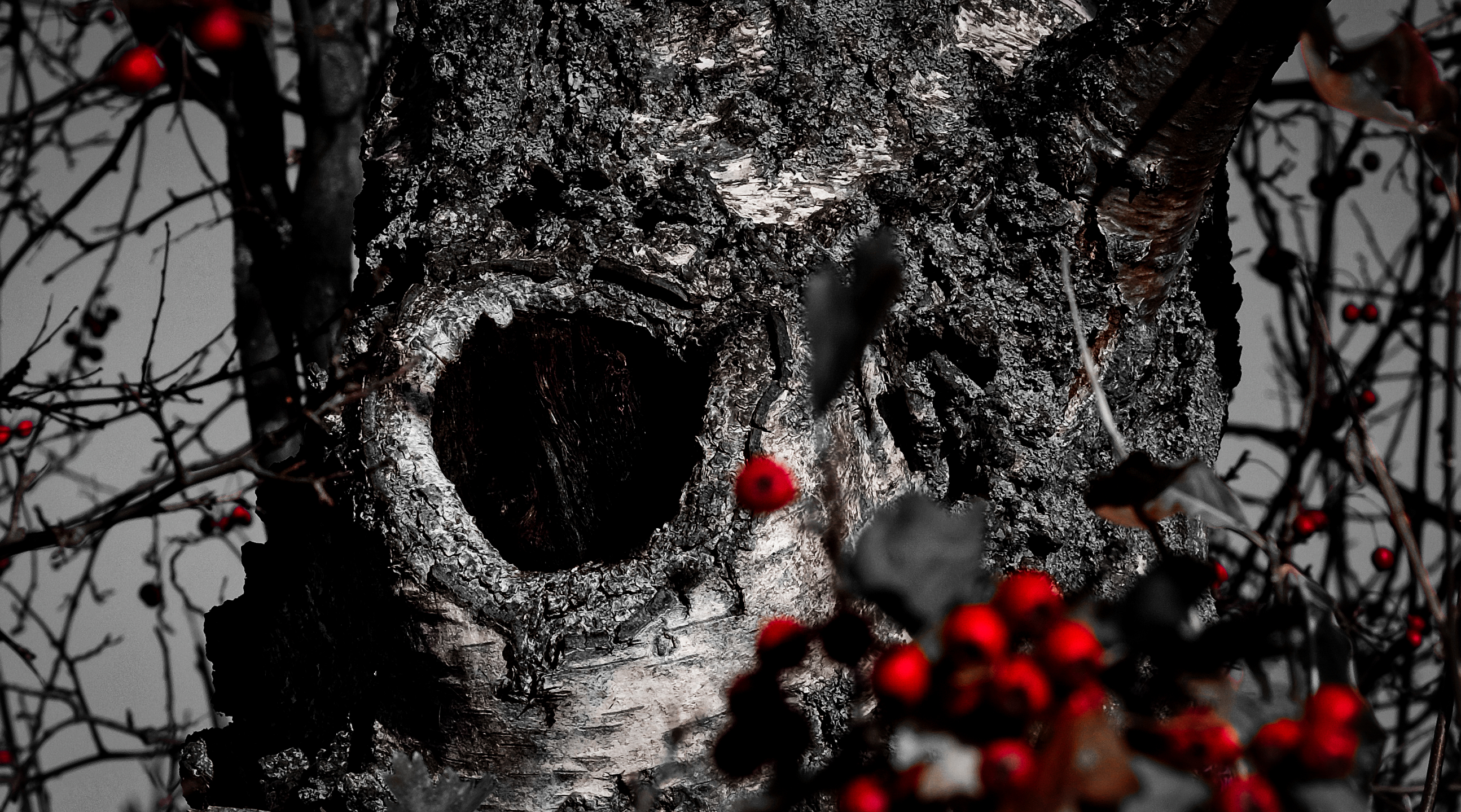 Baumhöhle / hollow trunk