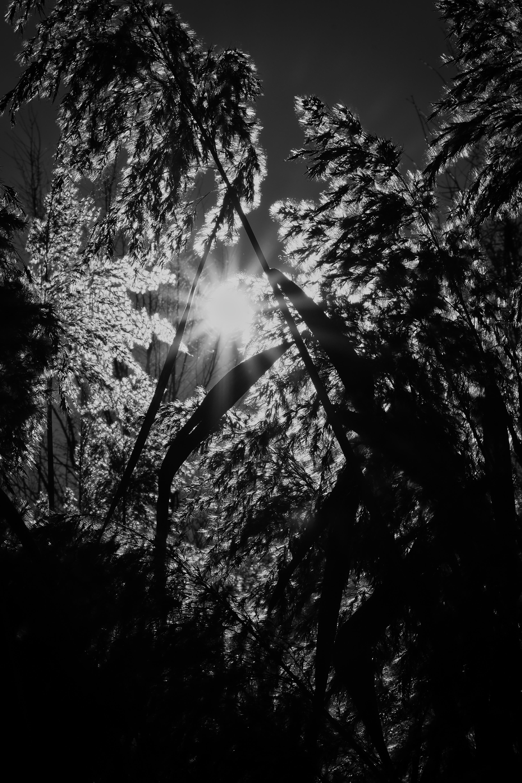 Schilf im Sonnenlicht / reed in the sunlight