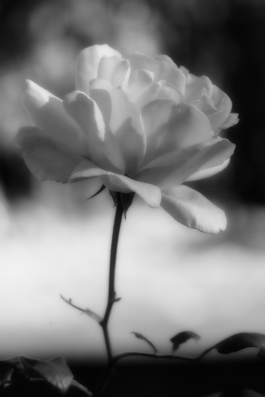 Farblose Schönheit / colorless beauty